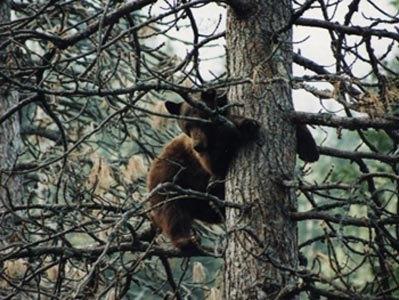 Afternoon Tree Climb
