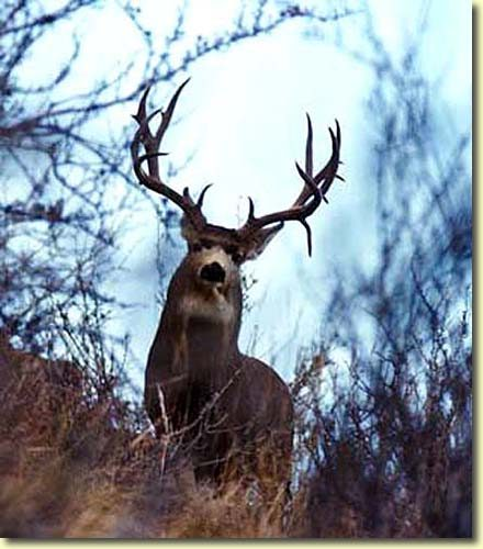 What a Buck!