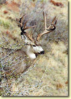 One Great Buck