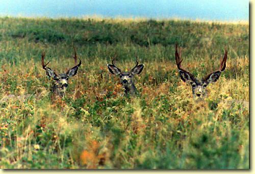 Northern Hawgs III