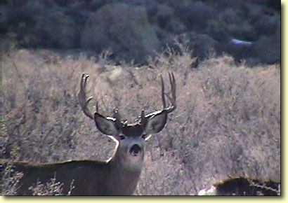 Big Bucks In California II