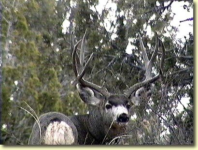 This Buck has a Great Frame