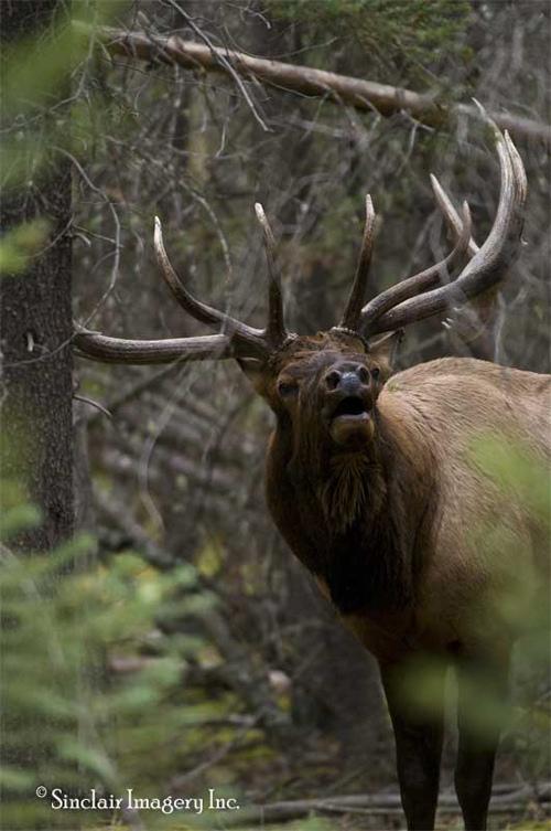 Northern Wildlife II