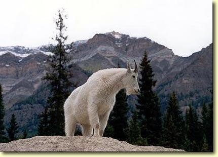 Western Wildlife
