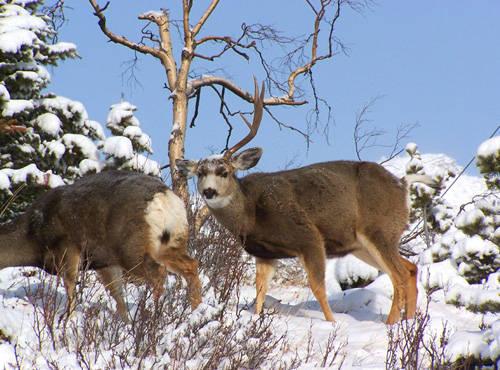 Sheddin' Bucks