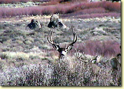 Big Bucks In California III