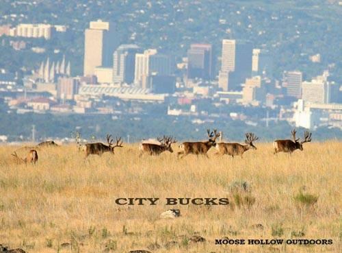 Bucks-n-Bulls II