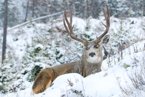 Nuts About Bucks VII