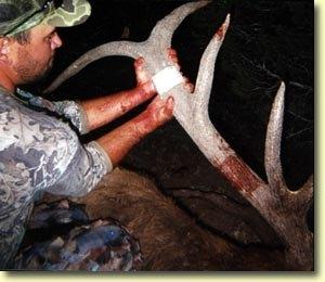 Derron's First Archery Bull Elk