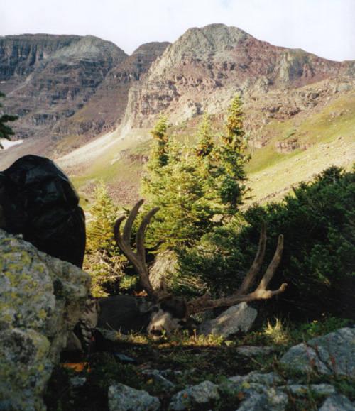Eric's Colorado High Country Buck