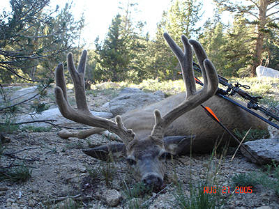 California High Country King