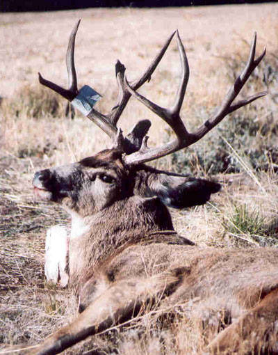 My Kaibab Trophy Hunt