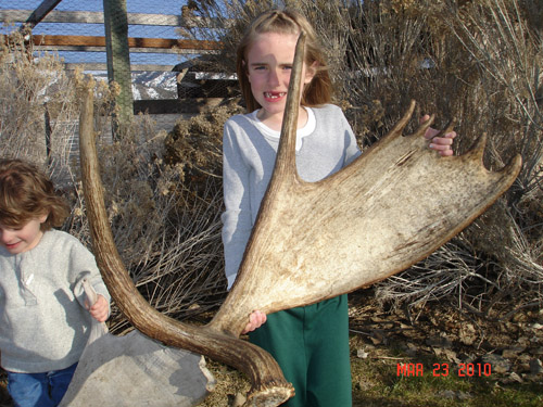 Where To Find Antler Sheds In Colorado You Won T Believe