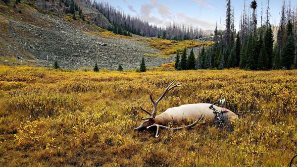 Backcountry Colorado Elk Hunting Adventure (Contest Winner
